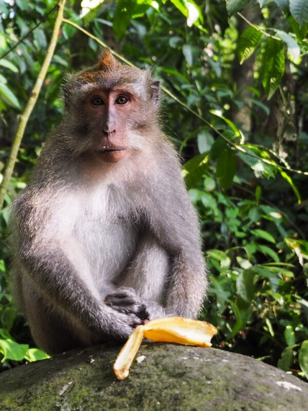 The dreaded group of Kuala Lumpur monkeys is right! (part1)