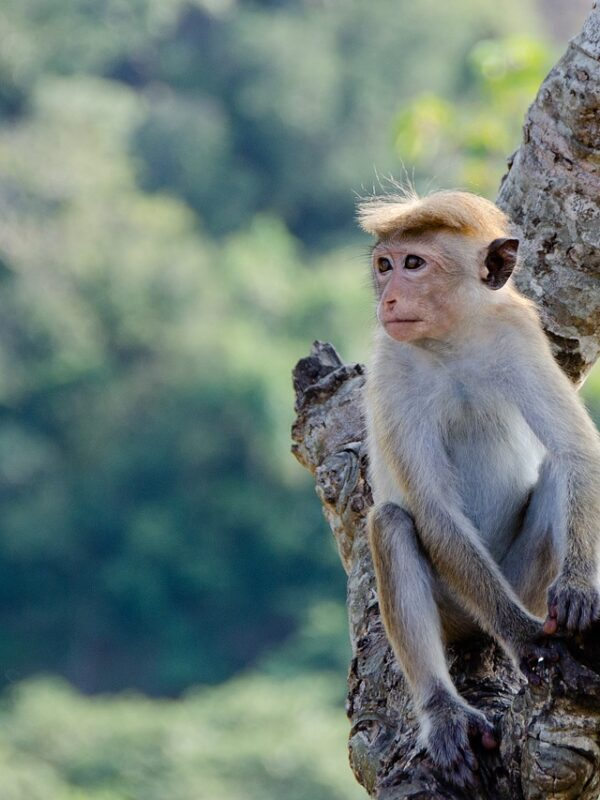 The dreaded group of Kuala Lumpur monkeys is right! (part2)