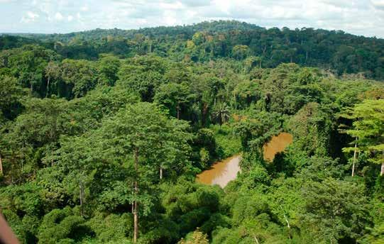 Umpolo Forest Reserve - Angola