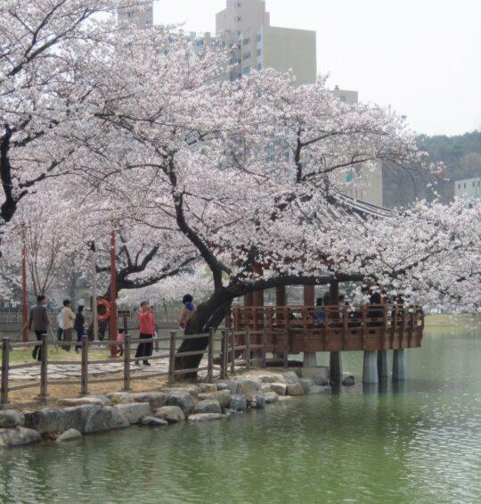 Gwangju and things to do